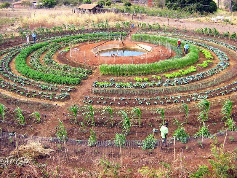 คำอธิบายภาพ : dc3a9marrer-un-potager-en-permaculture