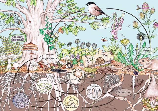 คำอธิบายภาพ : permaculture-design