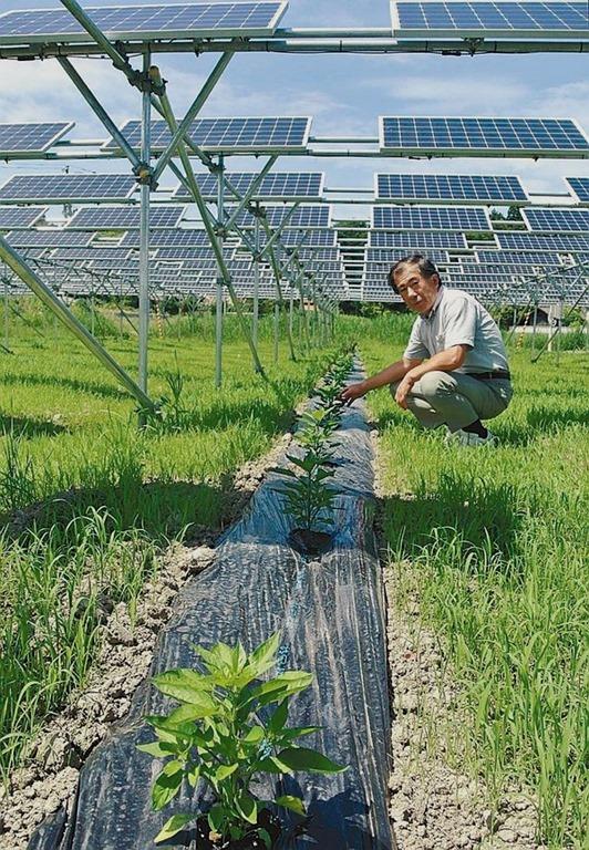 คำอธิบายภาพ : solar-sharing_bellona-ru